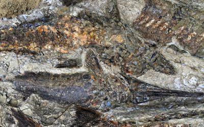 Arqueólogo estadounidense realiza estudio y revela cómo fue el último día de los dinosaurios.